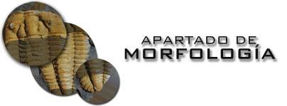 Apartado morfologia