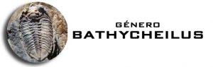 Genero Bathycheilus