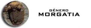 Género Morgatia