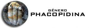 Género Phacopidina