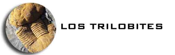 LOS TRILOBITES