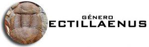 Género Ectillaenus